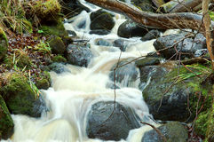 Green moss on stones river royalty free stock photo