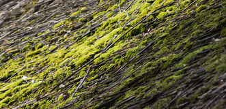 Green moss on a straw roof Royalty Free Stock Photos