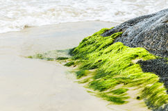 Green moss stuck in stone around sand and sea waves Royalty Free Stock Photos