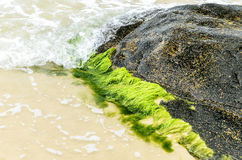 Green moss stuck in stone around sand and sea waves Stock Photo