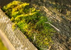 Green moss in the sunlight photographed / shot close - up / macro in the forest royalty free stock images