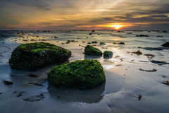 The green moss sunset. The green moss fertile on the rock during low tide sea water sunset Stock Photos