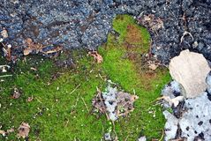 Green moss texture on asphalt and melting ice, soft blurry background. Close up stock image