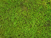 Green Moss Texture Background Stock Image