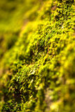 Green moss texture Stock Image
