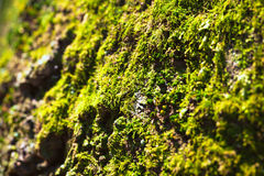 Green moss texture Stock Photo