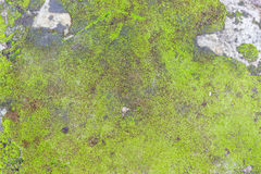 Green Moss. Texture of old stone covered green moss Royalty Free Stock Image