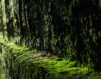 Green moss texture on old stone wall, background royalty free stock photography