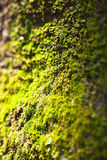Green moss texture and shadow Stock Images