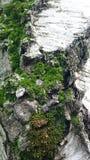 Green moss on textured tree bark background stock photos