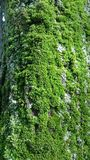 Green moss on textured tree bark background stock images