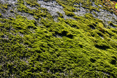 Green moss on the thatched roof Stock Photography