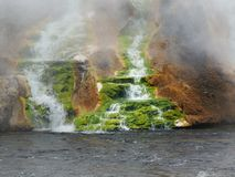 Green Moss at Thermal Falls. Steam-shrouded mossy thermal spring in Yellowstone Nat'l Park Royalty Free Stock Image