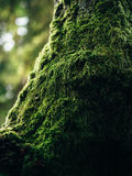 Green Moss in Tilt Photography Stock Image