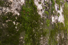 Green moss on the Tomb wall from the old vietnamese temple royalty free stock image