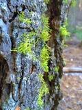 Green moss. On the tree Stock Photo