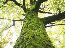 Green moss on Tree Bark Lichen Branch leaves Park outdoor Stock Image