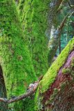 Green moss on a tree Stock Image