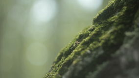 Green moss on a tree stock video