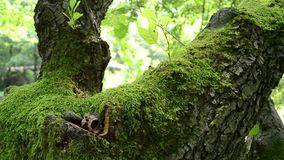 Green Moss on Tree stock video footage