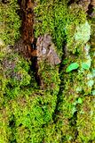 Green moss on the tree. mossy bark background. Stock Photography