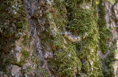 Green moss on the tree Royalty Free Stock Photography