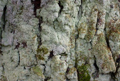 Green moss on an tree, on the rocks Stock Image
