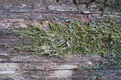 Green moss on tree texture Stock Images
