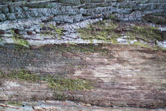 Green moss on tree texture Royalty Free Stock Photo
