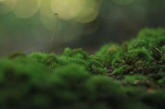 Green moss on Tree in The tropical garden ,Texture of green leaves, leaf in tropical Forest. stock image