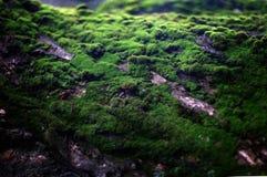Green moss on tree trunk. Closeup Stock Image