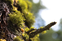 Green Moss on Tree Trunk 2 Stock Photo