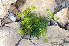 Green moss on tree trunk. Closeup macro photo Royalty Free Stock Photography