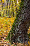 Green moss on the tree. With yellow leaves stock photos