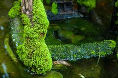 Green moss in tropical forest stock photo