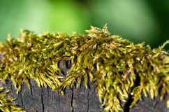 Green moss on the trunk Stock Photos