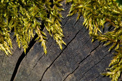 Green moss on the trunk Royalty Free Stock Photos