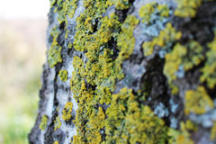 Green moss on the tree. Green moss on the trunk  tree Stock Photos