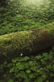 Green moss and vegetation on forest floor. Green ecosystem in the forest. Green moss and vegetation on forest floor royalty free stock photos