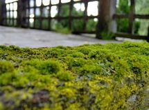 Green moss on wall. Details of green moss covering wall outdoors Royalty Free Stock Photo