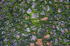 Green moss wall Royalty Free Stock Images