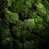 Green moss wall isolated objekcts. Darkphoto royalty free stock photo