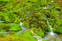 Green moss with water stream Royalty Free Stock Image