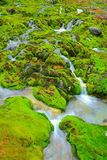 Green moss with water stream Stock Photography