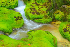 Green moss with water stream Stock Image