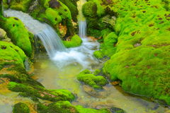 Green moss with water stream Royalty Free Stock Photography