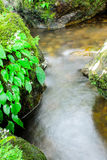 Green Moss and Waterfall in Deep Forest at Sarika Waterfall Thai Stock Image