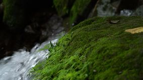 Green moss and waterfall in rainforest