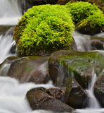 Green moss on wet rocks Royalty Free Stock Photo
