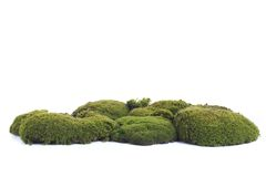 Green moss. On white background Stock Photography
